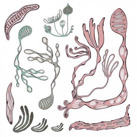 Cora Verhagen Organic Art